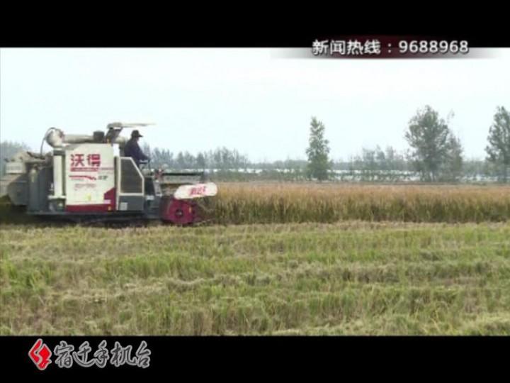 【视频】丰产丰收!籼稻平均亩产603公斤 收购价上涨