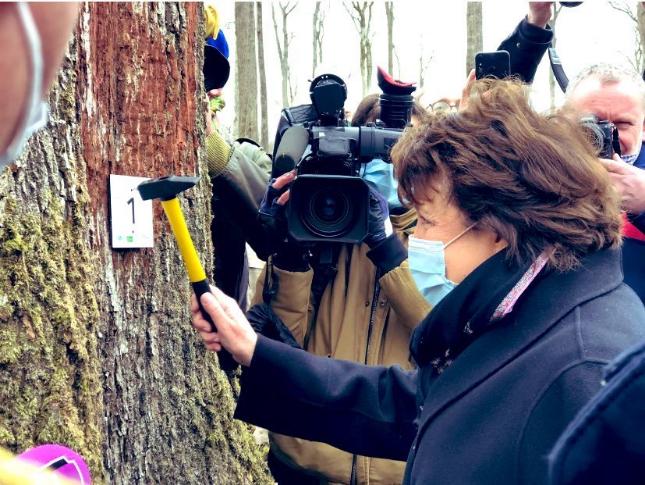 法文化部长:巴黎圣母院修复工作开始,将需要上千棵百年橡树