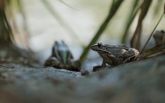 【得味视频】稻花香里说丰年 听取蛙声一片