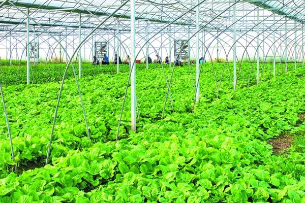 湖滨新区1-9月份农业经济运行平稳